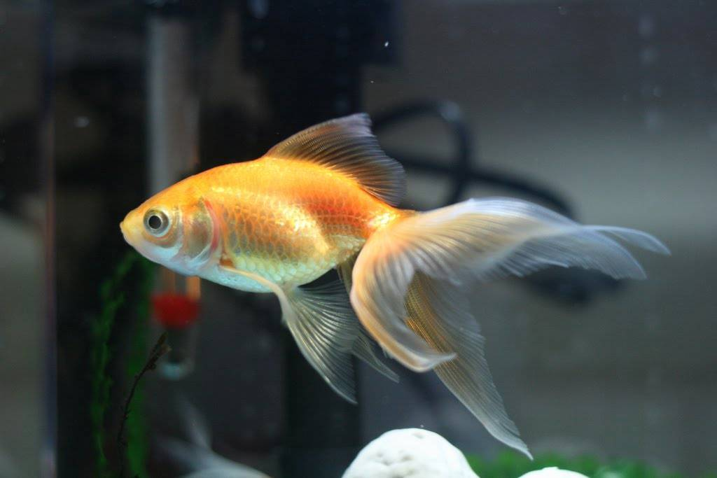 Complete aquarium checklist for beginners