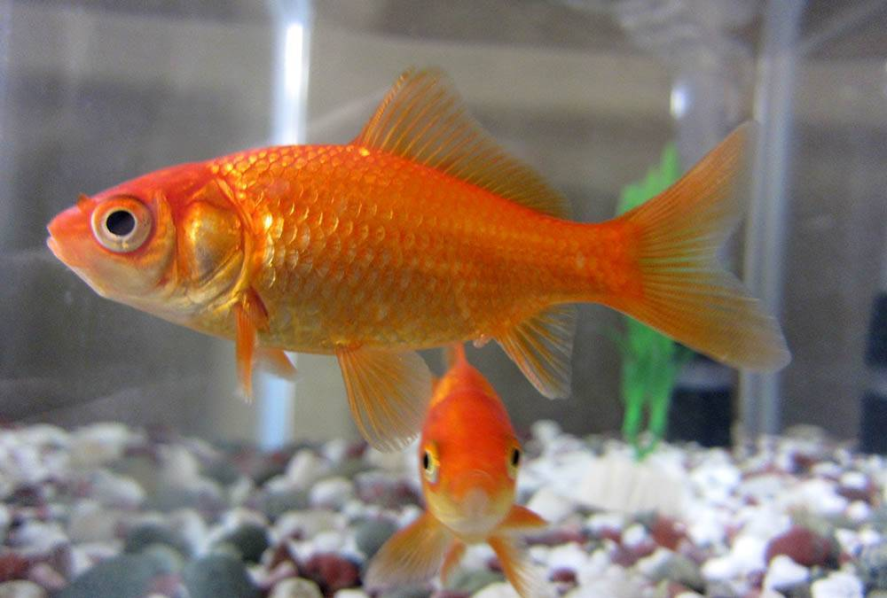 Buying an aquarium for a child or teen