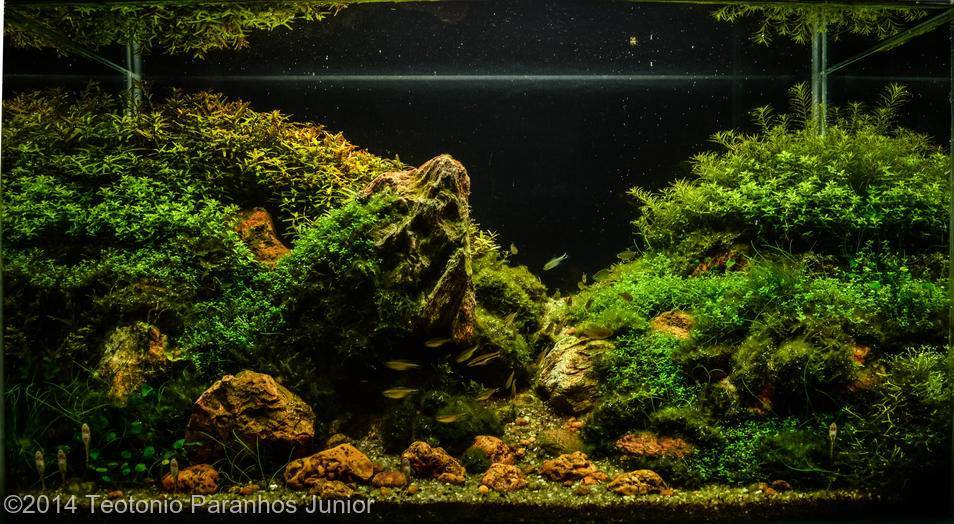 Aga aquascaping contest guidelines