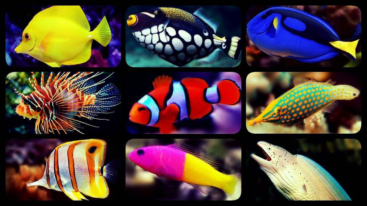 Aquarium facts for kids