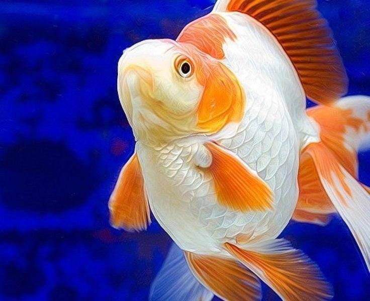 What to know before buying an aquarium