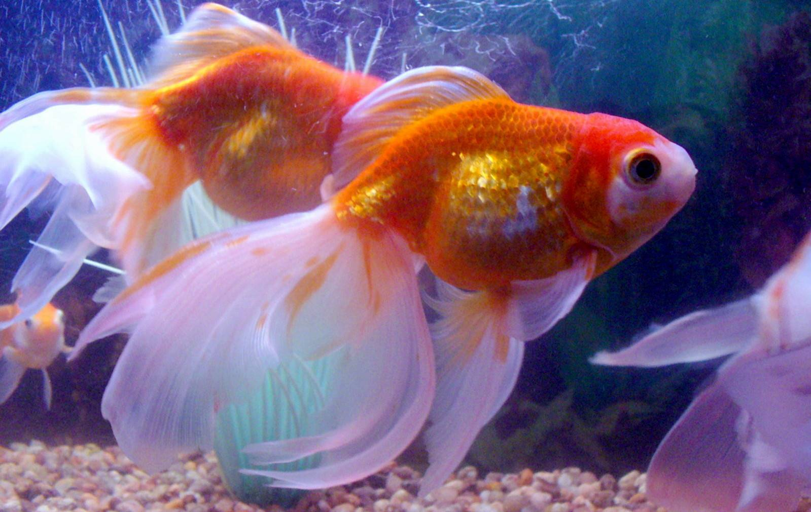 The 10 best aquariums for kids